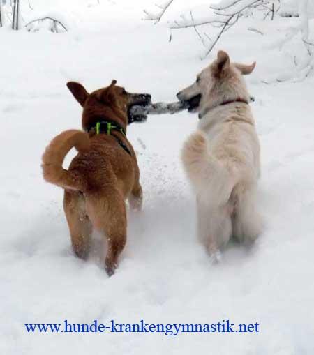 spondylose hund übungen